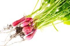 与根和地球的有机新鲜的未洗的萝卜 库存照片