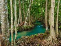 与根树的绿色水湖河瀑布在Tha Pom Klong歌曲Nam, Krabi,泰国 免版税库存图片