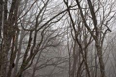 雾在森林里。 库存图片
