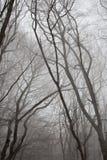 雾在森林里。 免版税库存照片