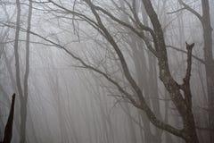 雾在森林里。 库存照片
