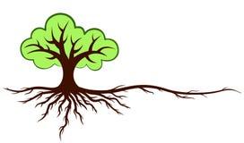 与根的绿色树 免版税库存图片