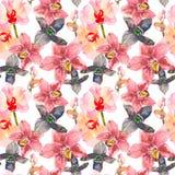 与桃红色兰花花的热带无缝的样式 在白色背景隔绝的热带花卉墙纸 异乎寻常 库存图片