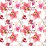 与桃红色兰花花的热带无缝的样式 在白色背景隔绝的热带花卉墙纸 异乎寻常 免版税图库摄影
