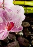 与桃红色兰花,详细资料的温泉场面 免版税库存照片