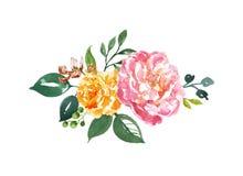 与桃红色和橙色牡丹和绿色叶子的水彩植物布置在白色背景 被隔绝的花花束