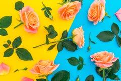 与桃红色和橙色玫瑰、芽和绿色的花卉样式在黄色和蓝色背景离开 平的位置,顶视图 花backgro 免版税图库摄影