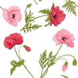 与桃红色和红色鸦片的无缝的样式开花 免版税库存照片