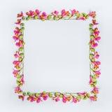 与桃红色和绿色异乎寻常的花的创造性的花卉设计框架布局在白色背景 库存照片