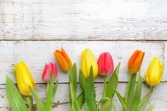 与桃红色和黄色郁金香的边界在老白色木头 顶视图 免版税库存照片