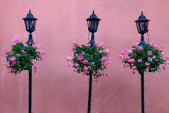 与桃红色墙壁、花和时髦的灯笼的都市风景 免版税库存图片