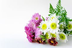 与桃红色大丁草关闭的花束菊花拷贝空间 免版税图库摄影