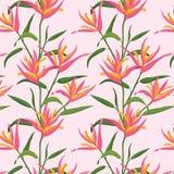 与桃红色天堂鸟的无缝的样式 免版税库存图片