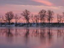 与桃红色天空的树反射 免版税库存图片