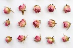 与桃红色干燥玫瑰的水平的样式在白色背景 平的设计图片有顶视图 免版税图库摄影