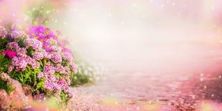 与桃红色庭院的庭院背景开花,横幅 免版税图库摄影
