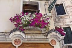 与桃红色开花的喇叭花的大厦在威尼斯,意大利开花 图库摄影