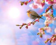 与桃红色开花的抽象春天边界背景 免版税库存图片