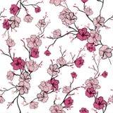 与桃红色开花的树枝,苹果树的无缝的样式或者 向量例证