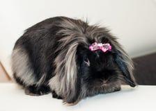 与桃红色弓的兔子 库存图片