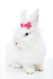 与桃红色弓的逗人喜爱的白色兔子 免版税库存图片