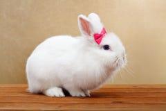 与桃红色弓的逗人喜爱的白色兔子 免版税库存照片