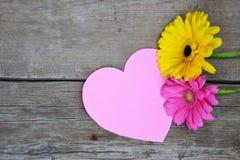 与桃红色心脏的两朵大丁草花在木头 免版税库存图片