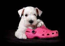 与桃红色拖鞋的甜小狗 库存图片