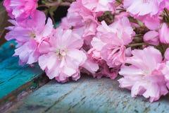 与桃红色日本樱花关闭的土气样式春天背景 库存照片