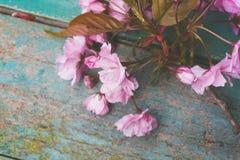 与桃红色日本樱花关闭的春天背景 库存图片