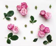与桃红色明亮的玫瑰和叶子的装饰框架在白色背景 库存图片