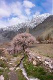 与桃红色樱桃树的小运行流与高雪moutain 免版税库存图片