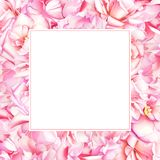与桃红色牡丹和玫瑰色花的水彩花卉框架 图库摄影