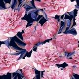 与桃红色牡丹的无缝的水彩背景 库存图片