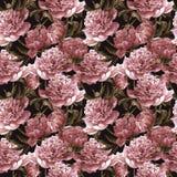 与桃红色牡丹的无缝的水彩背景 免版税库存照片