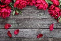 与桃红色牡丹的花卉框架在土气木背景开花 库存图片