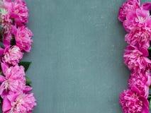 与桃红色牡丹的花卉框架在木背景开花 选择聚焦,文本的,顶视图地方 免版税图库摄影