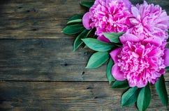 与桃红色牡丹的花卉框架在木背景开花 选择聚焦,文本的,顶视图地方 免版税库存图片
