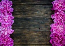 与桃红色牡丹的花卉框架在木背景开花 选择聚焦,文本的,顶视图地方 库存图片