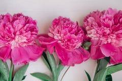 与桃红色牡丹的花卉框架在木背景 母亲节或妇女天 背景横幅开花表单少许桃红色螺旋 图库摄影