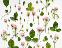 与桃红色玫瑰、叶子和芽的装饰样式在白色背景 平的位置,顶视图 库存照片