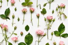 与桃红色玫瑰、叶子和芽的装饰样式在白色背景 平的位置,顶视图 图库摄影