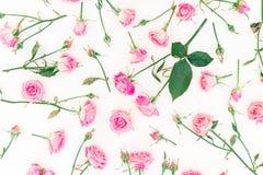 与桃红色玫瑰、在白色背景隔绝的分支和叶子的花卉自然样式 平的位置,顶视图 免版税库存照片