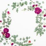 与桃红色玫瑰和玉树的花卉框架分支 平的位置,顶视图 开花构成 图库摄影