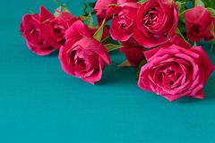 与桃红色玫瑰的情人节背景在木桌 与拷贝空间的顶视图 母亲` s天, 免版税库存图片