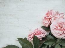 与桃红色玫瑰的情人节背景在木桌 土气,浪漫 免版税库存图片