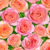 与桃红色玫瑰的无缝的背景 免版税库存图片