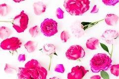 与桃红色玫瑰的样式开花,瓣和牡丹花在白色背景 平的位置,顶视图 库存照片