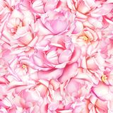 与桃红色玫瑰的水彩美好的自然本底 图库摄影