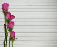 与桃红色玫瑰的浪漫花摄影图象在自然白色木背景的芽 免版税库存照片